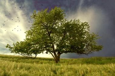 Tree_of_life_by_wtamas